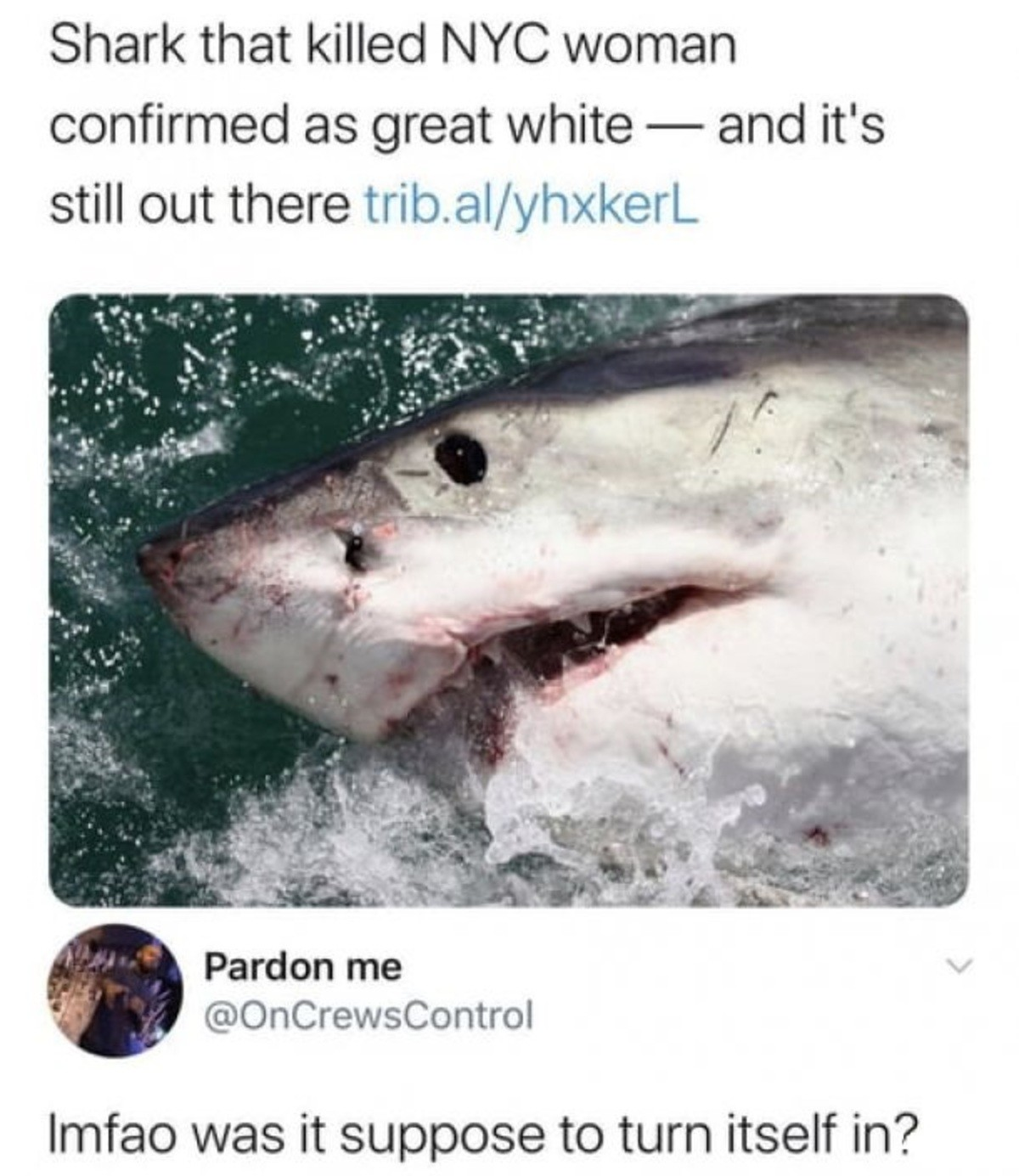 Shark at Large. .. Of course they report it when it's a WHITE shark