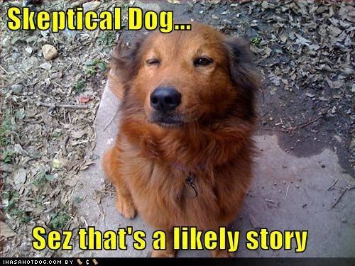 Skeptical dog.. Is skeptical..