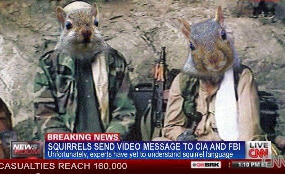 Terrorists. . I SQUIRRELS SEND VIDEO MESSAGE / AND FBI Unfortunately, experts have yet to understand squirrel Language. they've killed 160k people? I think the message they're trying to send is clear.