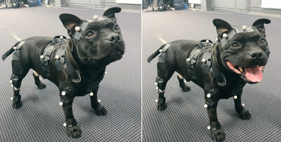 The best motion capture boy.. join list: CuteDogs (233 subs)Mention History.. Such a cute truck.