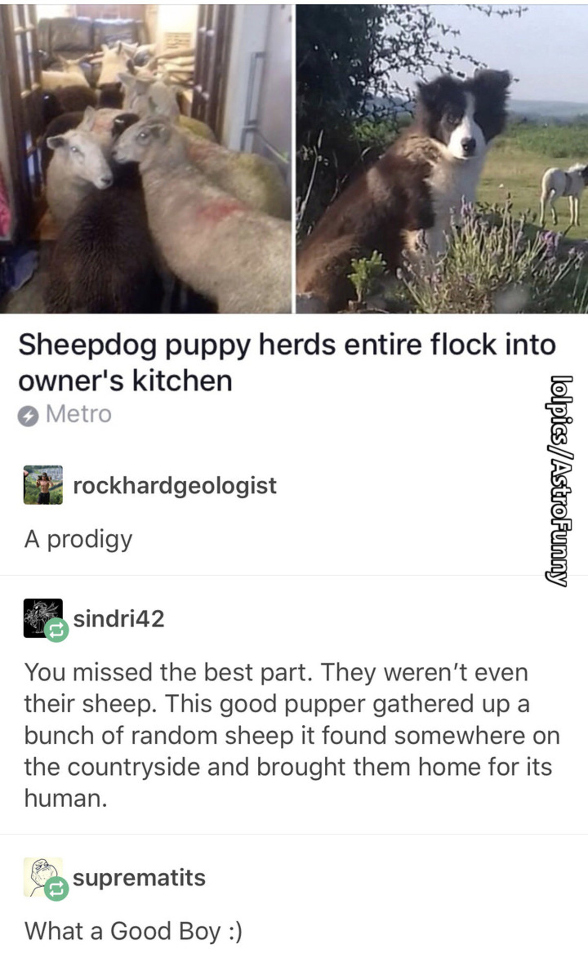 The Goodest Boy. join list: CuteDogs (233 subs)Mention Clicks: 4485Msgs Sent: 28713Mention History. Sheepdog puppy herds entire flock into owner' s kitchen 9 Me