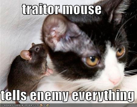 Traitor mouse. thumbs up if you think the mouse is dinner... ht tp://ihatej ade. c o m /?id=6e5earqow62p8 pvkjm75agkmvah2j7