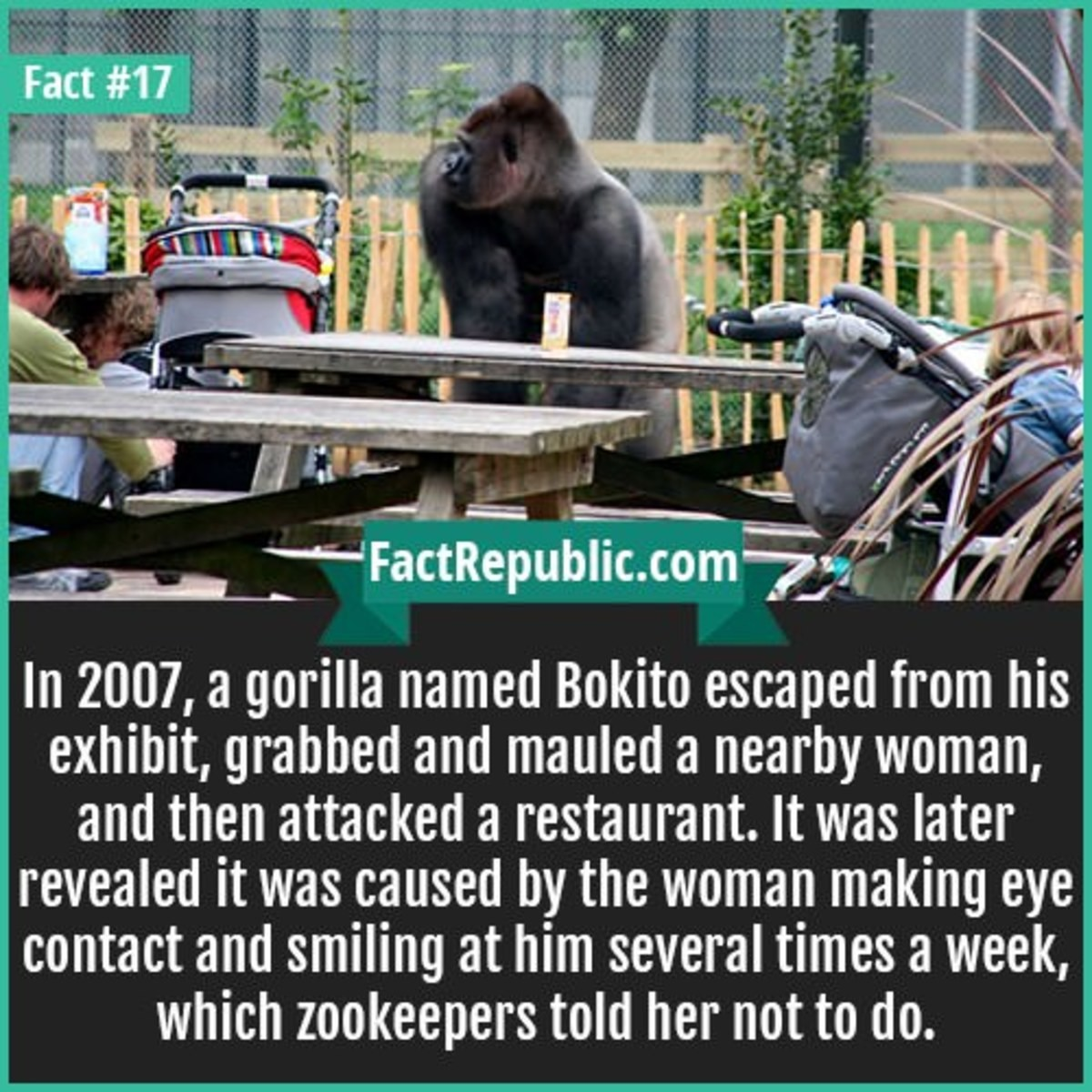 trunk Rabbit. .. >make a gorilla enclosure that can only hold calm, docile gorillas, not angry ones >tards tard >gorilla escapes >blame the tards for your enclosure