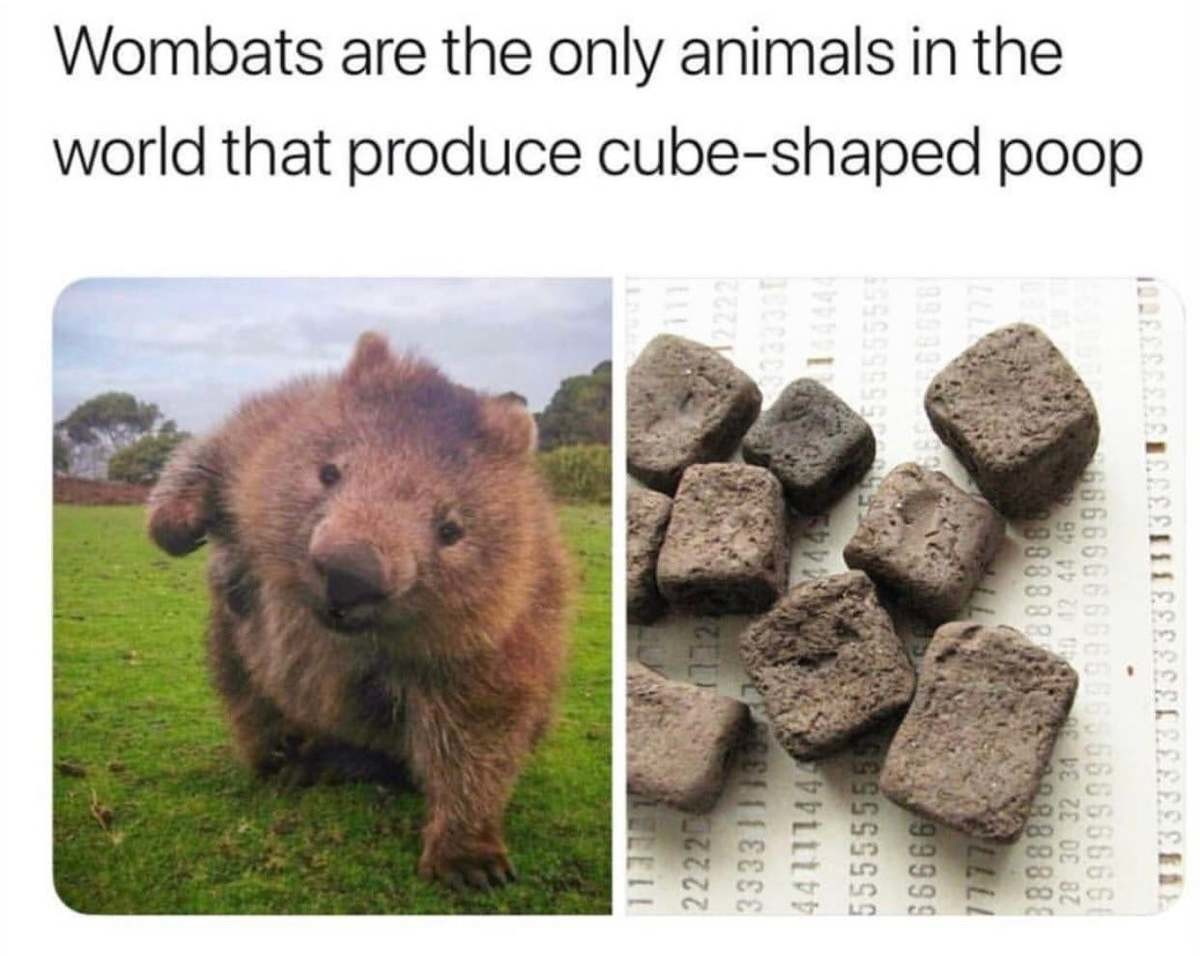 Wombat Poop. .. Why do they care if they don't roll?