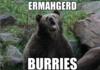 Burries