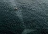 Boat passes over Blue Whale