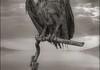 Birds are mummified