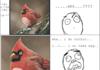 bird's wrath