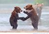 bear handshake in the rain