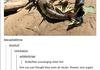 budderflys