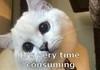 Bad Pun cat