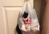 Bagged cat