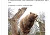 bearbearbear