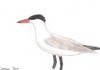 Birds Post 2/5
