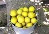 Bucket of lemons.