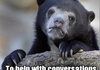 bear confession