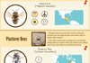 Buzzing Demons, by Category (Bees, Hornets, & Wasps)
