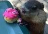 Birthday Groundhog