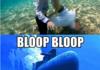 Bloop Bloop