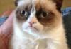 Grumpy wish