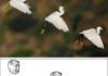 Birdfaces