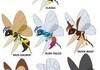 Beedrill Variations
