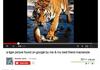 Best youtube viedo