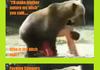 Bearly funny